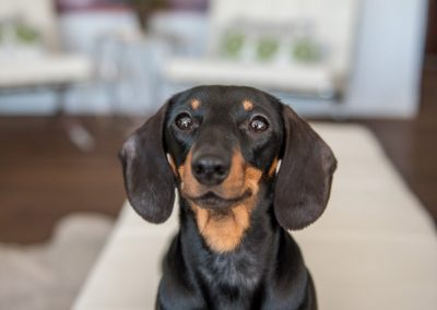 A Mona Lisa smile from the diva dachsie