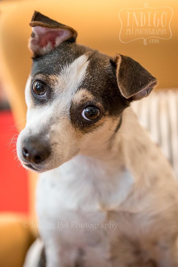 Lilly close up by Niagara Pet photographer Karen Black