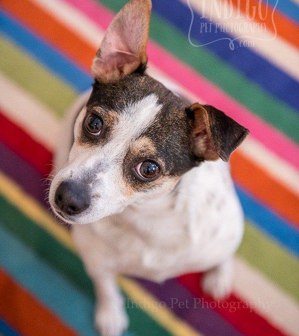 Lilly looking inquisitive by Niagara Pet photographer Karen Black