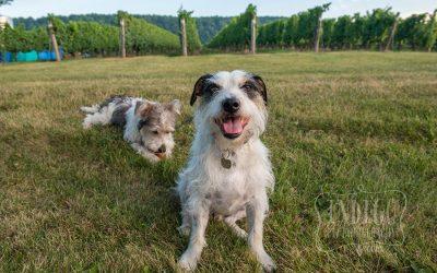 Niagara Pet Photographer: The Power of Threes