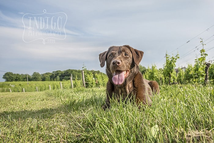 Niagara Pet Photography – The many faces of Jasmine