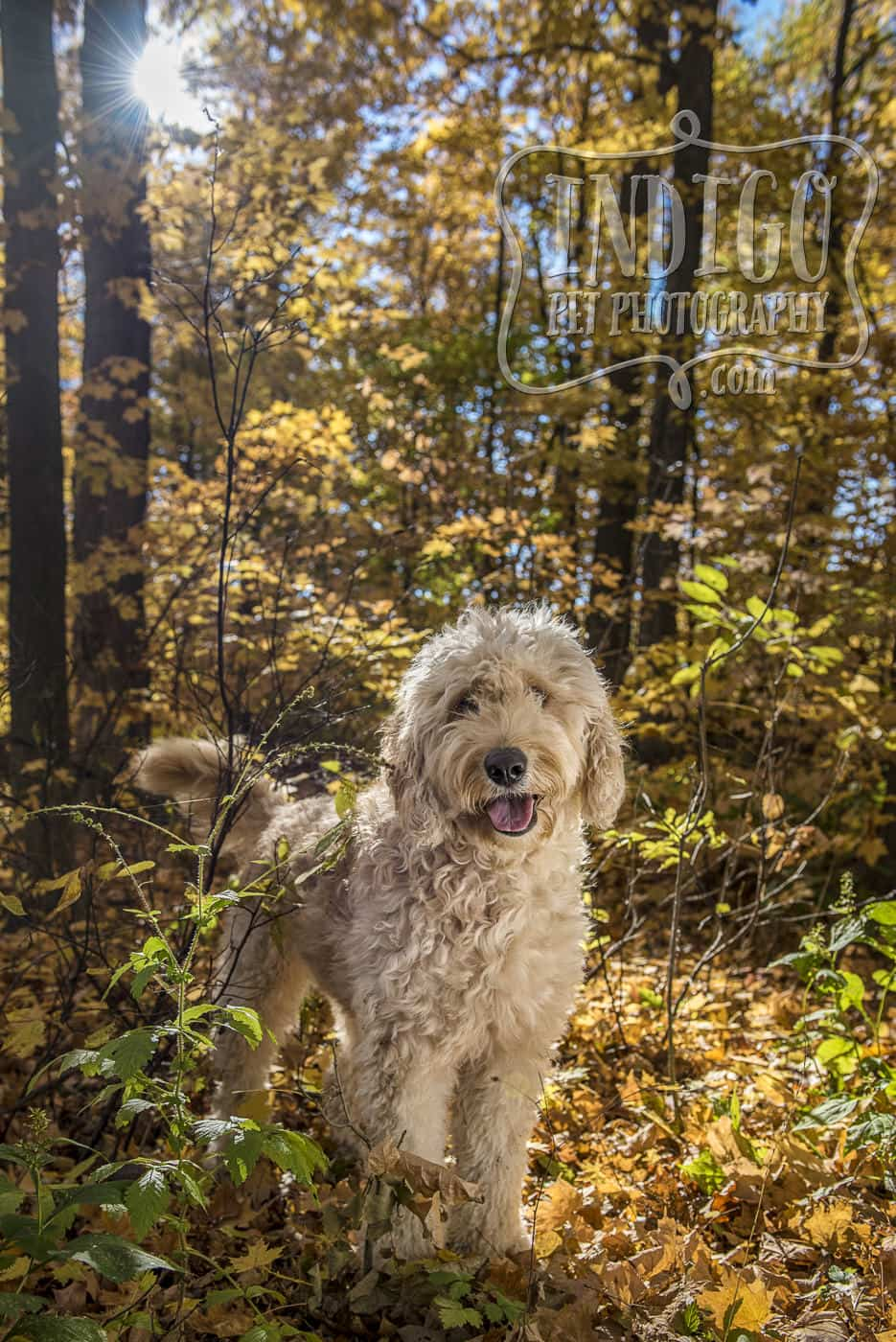 Lucy the doodle