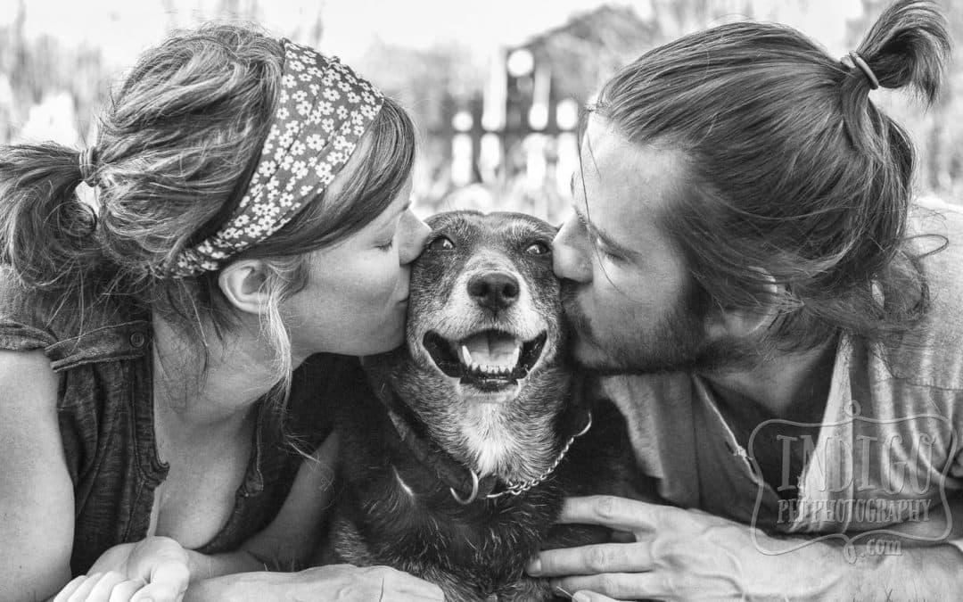 Toronto & Niagara Pet Photographer: Top 10 images of 2015