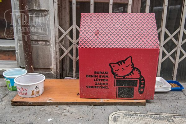 Cat House on Istanbul street
