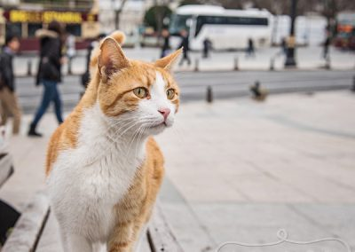 IndigoPP-cats-dogs-of-istanbul-011-2