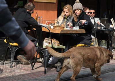 IndigoPP-cats-dogs-of-istanbul-016