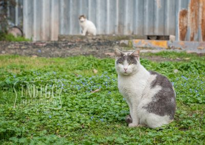 IndigoPP-cats-dogs-of-istanbul-019