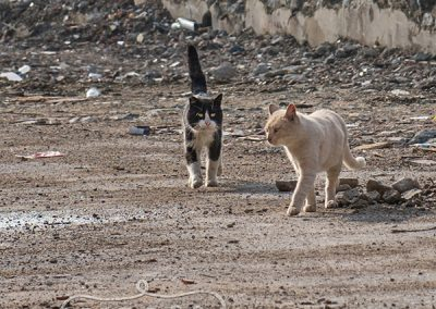 IndigoPP-cats-dogs-of-istanbul-022