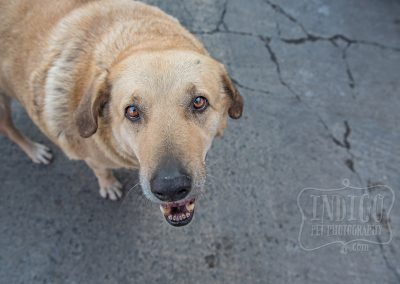 IndigoPP-cats-dogs-of-istanbul-026