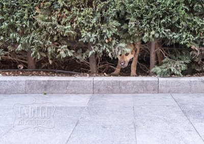 IndigoPP-cats-dogs-of-istanbul-028