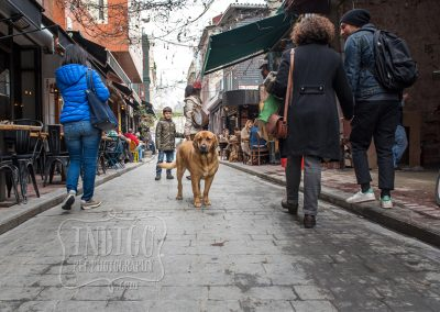 IndigoPP-cats-dogs-of-istanbul-031
