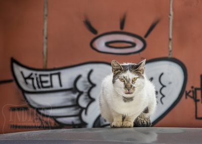IndigoPP-cats-dogs-of-istanbul-033