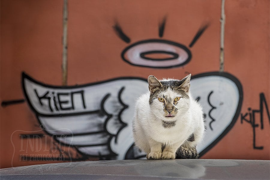 Dogs and Cats of Istanbul – A Canadian pet photographer's experience