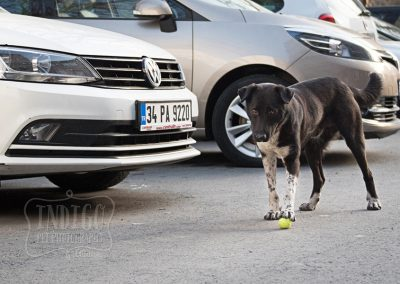 IndigoPP-cats-dogs-of-istanbul-034