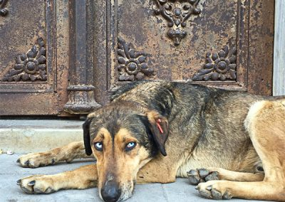 IndigoPP_cats-and-dogs-of-istanbul-035 2