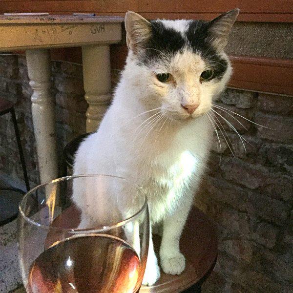 Cats of Istanbul, Eşref the bar cat