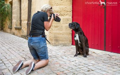 Dog Photography | It's how we roll | Barkjour part II