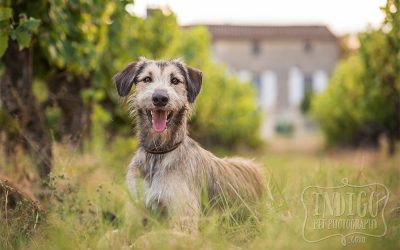 Barkjour | Indigo Pet Photography goes to les chiens | Part 1