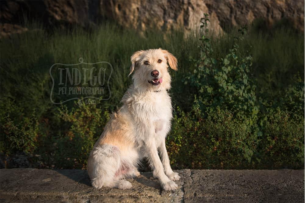 Scruffy dog sitting for portrait