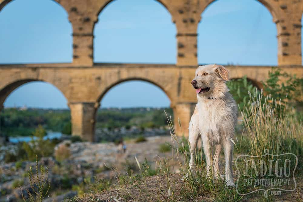dog posing in front of the Pont du Gard