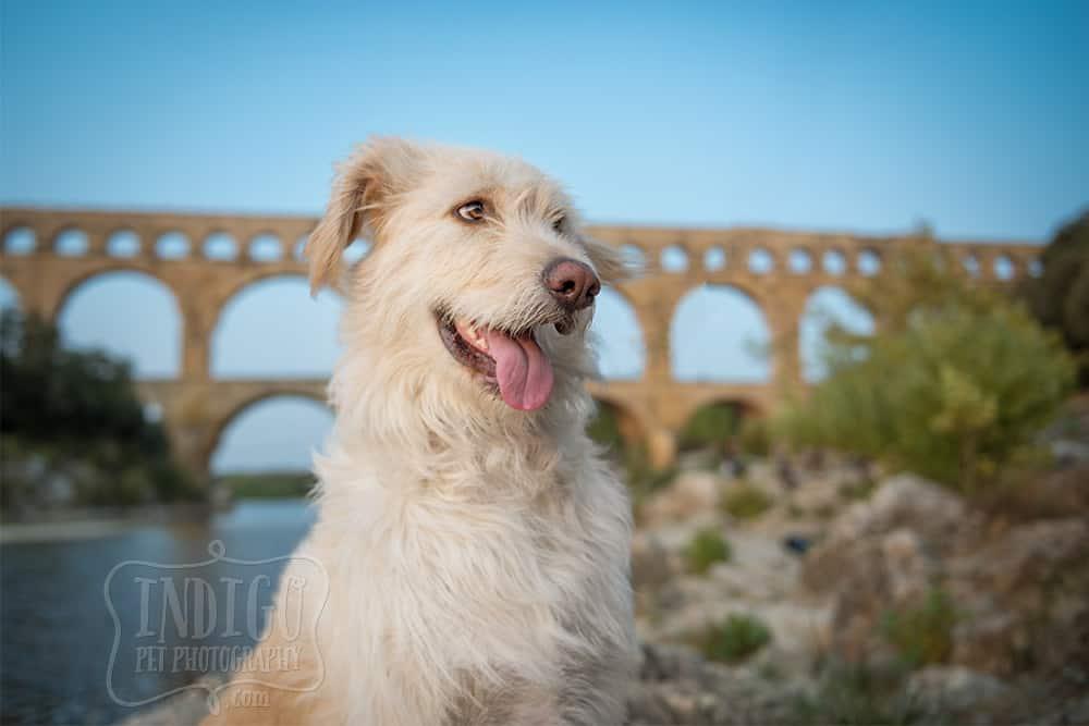 Cute dog at the Pont du Gard