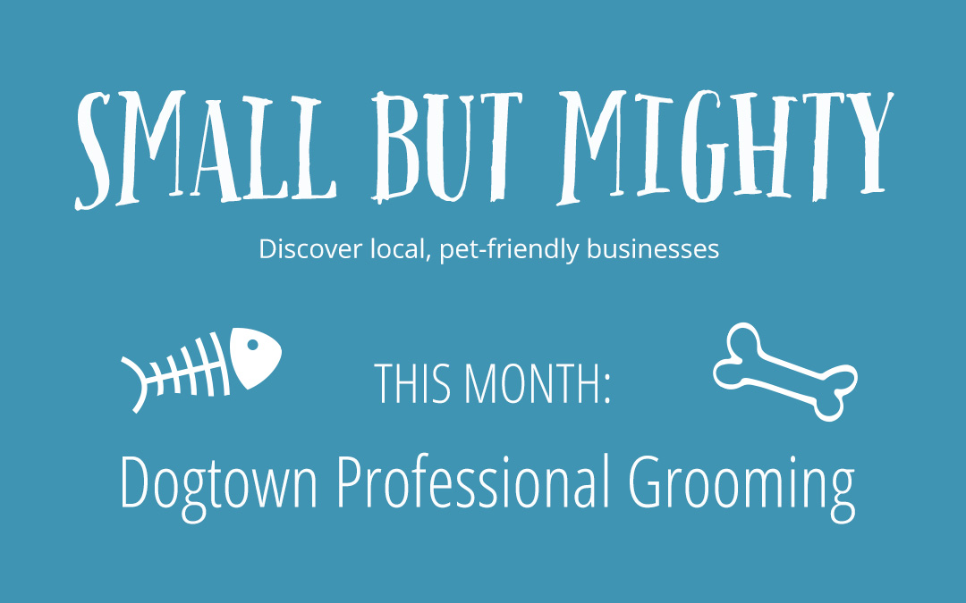 Small but Mighty Series: Dogtown Professional Grooming