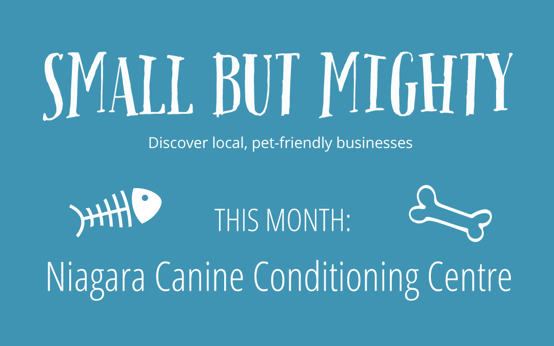 Small but Mighty Businesses- Niagara Canine Conditioning Centre
